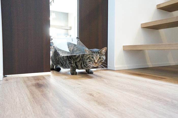 愛犬や愛猫が自由にアクセスできる開口をしつらえた「フルハイトドア」。 開口部に厚さ1mmのポリカーボネイトを採用することで、通り抜ける際、ペットに負担がかからず、スムーズに行き来できます。