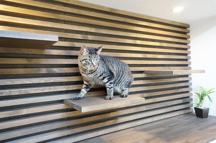 オーナーこだわりの飾り棚を兼ねたキャットステップ。 かんたんにステップのレイアウト変更が可能。ペットへの思いやりが うかがえるデザインに仕上がっている。