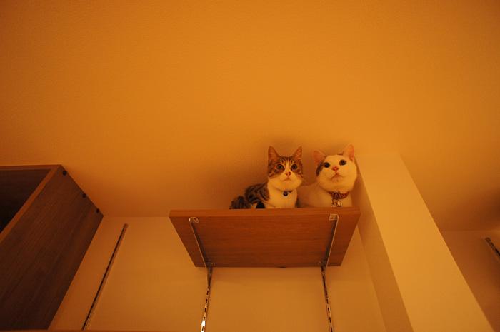 猫と暮らす家|三条市|N様邸